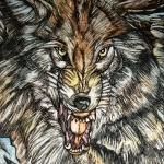 grey-wolf_0