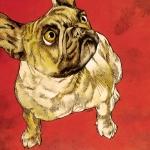 brbulldog